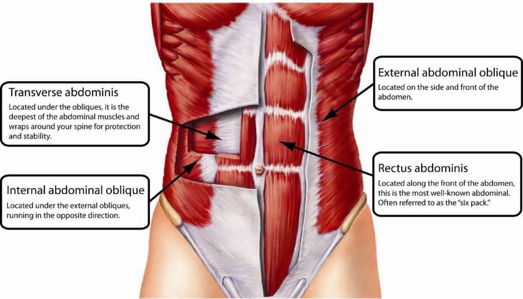 abdominal-muscles-anatomy-1024x585