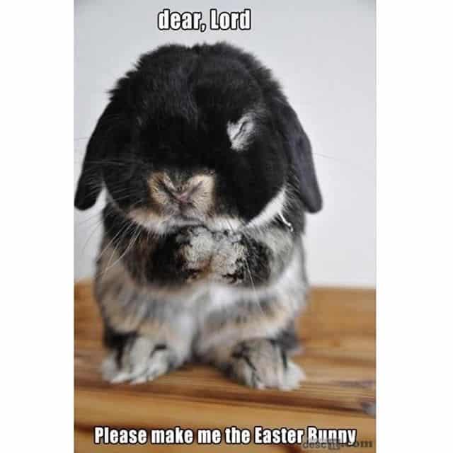 easter bunny prayer